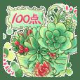 Succulent plant jp