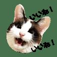 可愛い猫の一言返信スタンプ