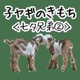 子ヤギのきもち【七夕兄弟2】吉懸牧場5