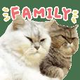 Cat Cat Family!