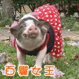 小乖家的豬寶貝們-波妞