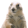 [Photos only] Prairie dog's stickers 4