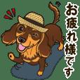 気軽にダックス(チョコタン) 夏編