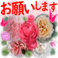 Greetings message of the Rose blooms