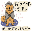 Every Day Dog Golden Retriever Jpn