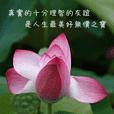 心靈小語-花系列
