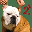 Bulldog's Fuku 2