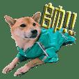 柴犬-飯糰的生活語錄-