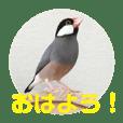 桜文鳥ピーちゃんの日常使いスタンプ