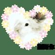 Bucci X JieJie bunny