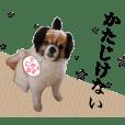 ヒナちゃんのトモダチ【こたろう】