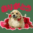 【ペキックスのれん&猫のしゅら】ヒナ友