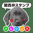 黒ラブ・シンちゃん♪(関西弁ver)