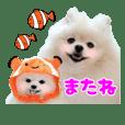 ポメのひめとこひめ〜ワクワク水族館編〜