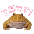 frog_stamp_sy