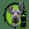 MOCA pups/Taiwan dogs