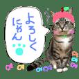 愛猫レモンちゃんスタンプ①
