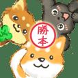 勝本さん用 柴犬・チワワ・トイプー