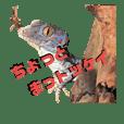 gecko-