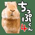 Rabbit of chip -kun4