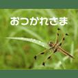 虫やのスタンプ トンボ編