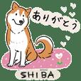 Every Day Dog SHIBA Jpn 2