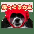 愛犬スタンプ〜かぶりものver.①〜