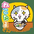 NEKOTAMASAN -Food&rendezvous etc-