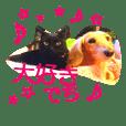 cawaii sakura-chan