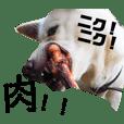 紀州犬ごまの変顔スタンプ