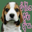 Hipster Nimo Beagle