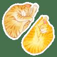 Sleeping Weird Cats