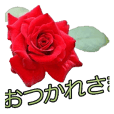 美しい薔薇 1