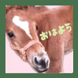 仔馬ちゃん(子馬、HORSE、写真、実写版)