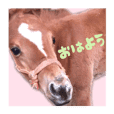 HORSE (PHOTO)