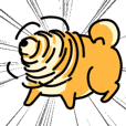 Cute chubby Shiba Inu for Shiba lover 3