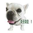 Hangi Li Daily Life