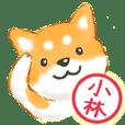 小林さん用 柴犬・チワワ・トイプー