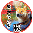 Shibainu Tsumugi ---autumn sticker---