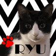 RYU the black&white(monotone) cat
