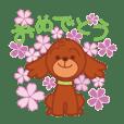 Teddy poodle