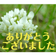 flower photo messages 2 (Japanese)