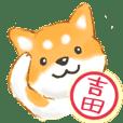 吉田さん用 柴犬・チワワ・トイプー