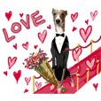 Emotional italian greyhound
