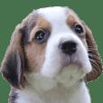 Nimo Beagle Ver.05