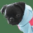 黒パグの子犬の使いやすいスタンプ