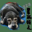 Dog_Candy
