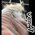 Horseface (Face of a horse) picture.-7-