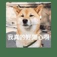 淡定柴犬-柚子的101種表情