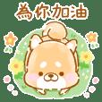 體貼❤療癒的柴犬❤